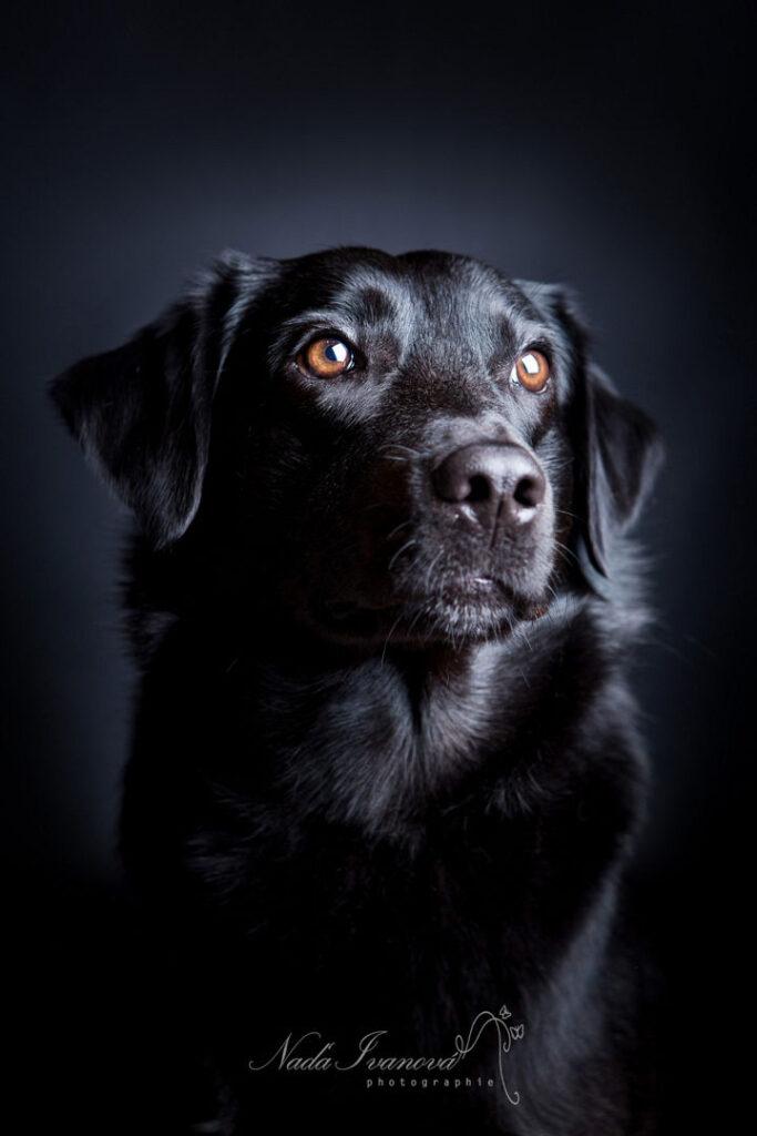 photo de chien par nada ivanova